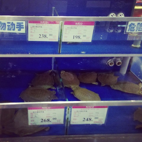 China Qingdao Turtles