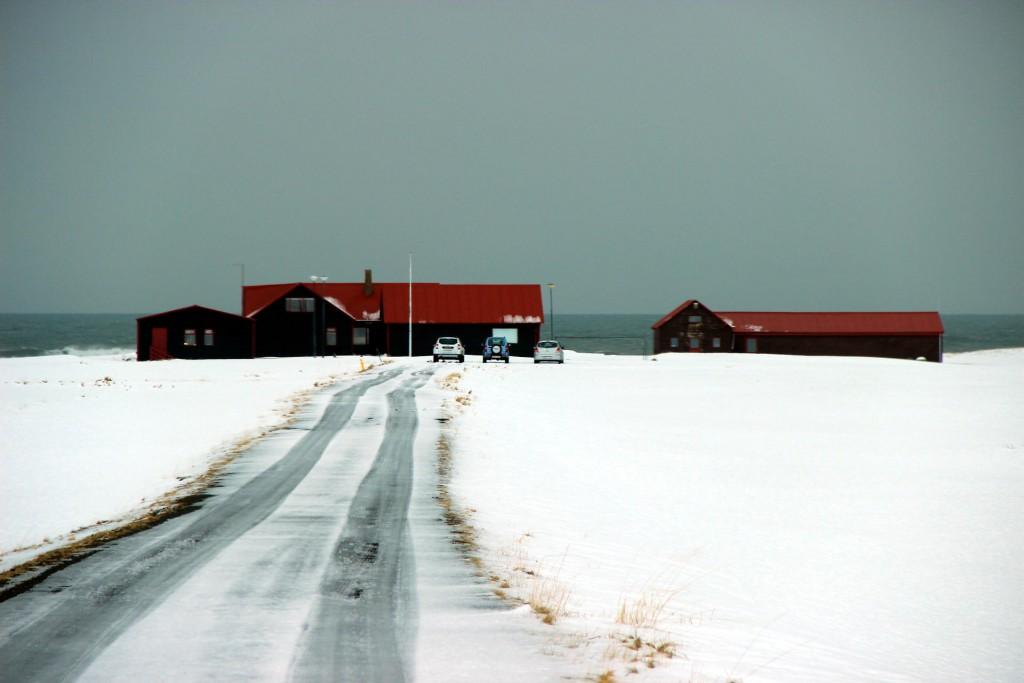 Seehunde auf Snæfellsnes