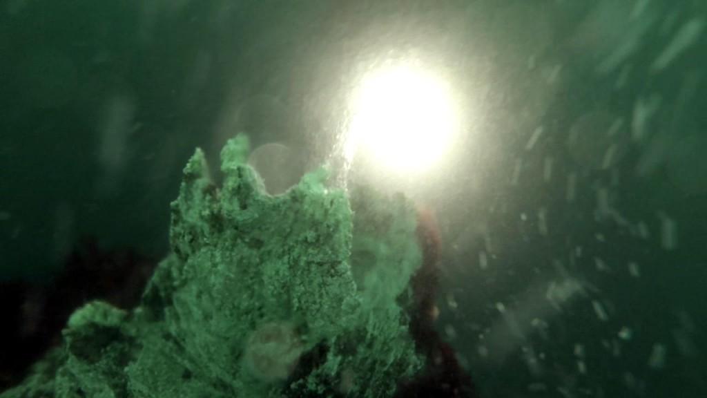 Heliocline in Strytan beim Tauchen