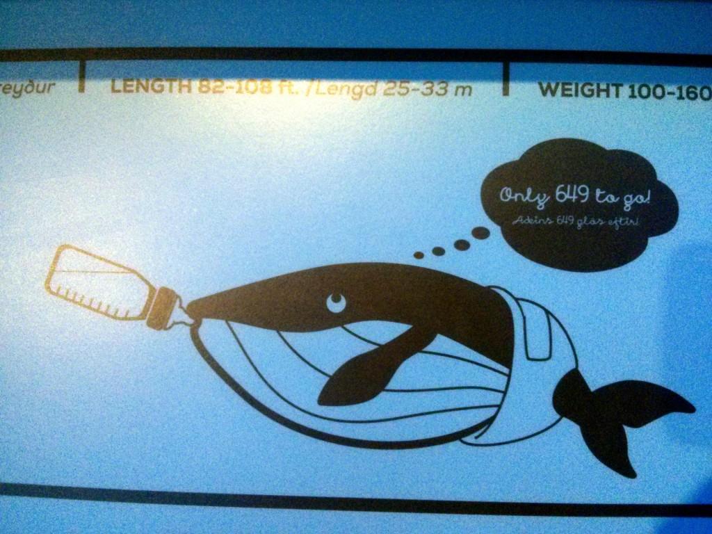 Babywale trinken 650L Milch am Tag - Ungefähr so viel wie ein Isländer Coca Cola ;)
