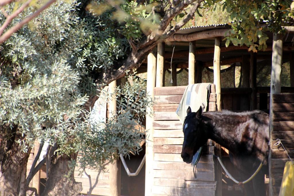Pferde in Welgedacht