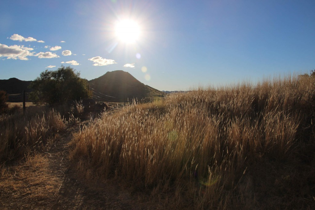 Die Sonne auf dem Weg zum Addo Nationalpark