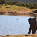addo-elefanten-nationalpark-suedafrika_6013