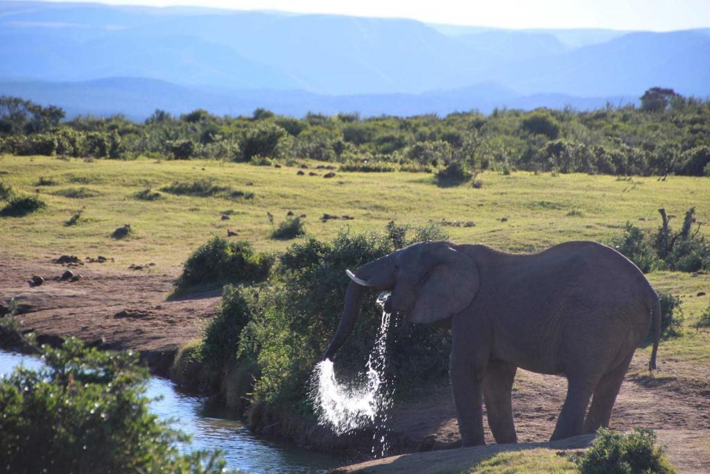 addo-elefanten-nationalpark-suedafrika_6034