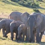 addo-elefanten-nationalpark-suedafrika_6125