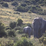 addo-elefanten-nationalpark-suedafrika_6204