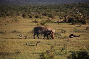 addo-elefanten-nationalpark-suedafrika_6269