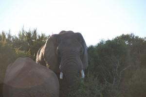 addo-elefanten-nationalpark-suedafrika_6278