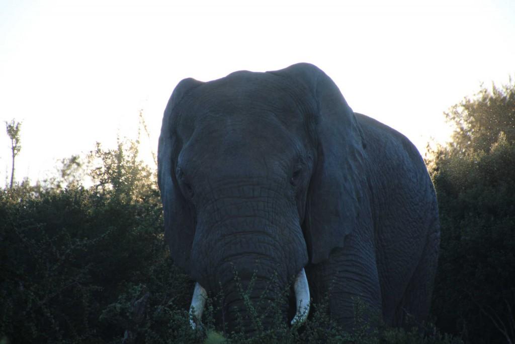 addo-elefanten-nationalpark-suedafrika_6284