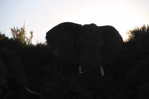 addo-elefanten-nationalpark-suedafrika_6342