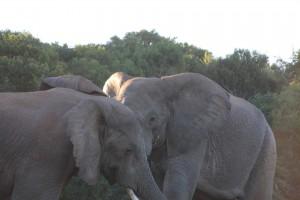 addo-elefanten-nationalpark-suedafrika_6355
