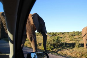 addo-elefanten-nationalpark-suedafrika_6369