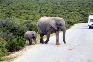addo-elefanten-nationalpark-suedafrika_6548