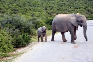 addo-elefanten-nationalpark-suedafrika_6549
