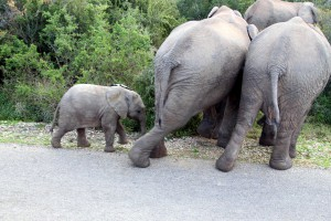addo-elefanten-nationalpark-suedafrika_6560