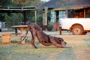 suedafrika-road-trip_5280
