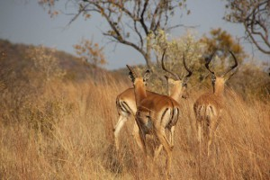 suedafrika-road-trip_5329