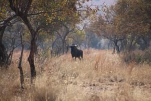 suedafrika-road-trip_5331