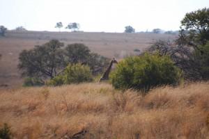 suedafrika-road-trip_5374