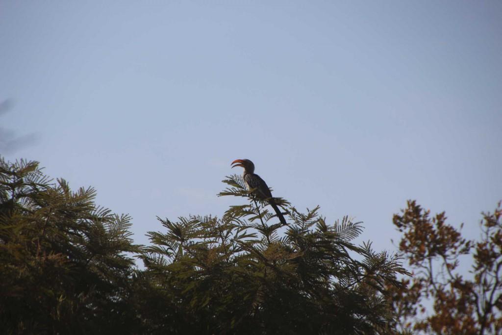 suedafrika-road-trip_5381