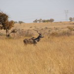suedafrika-road-trip_5412