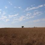 suedafrika-road-trip_5437