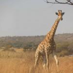 suedafrika-road-trip_5534