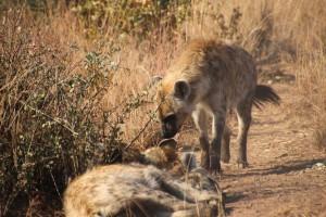 suedafrika-road-trip_5595