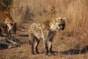 suedafrika-road-trip_5601