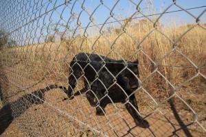 suedafrika-road-trip_5642