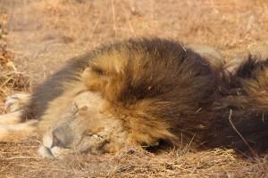 suedafrika-road-trip_5653