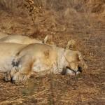 suedafrika-road-trip_5656