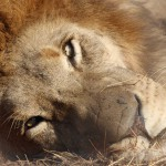 suedafrika-road-trip_5673