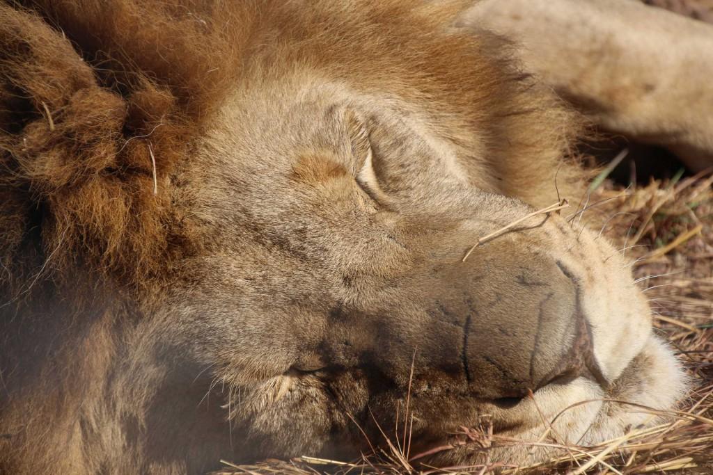 suedafrika-road-trip_5676