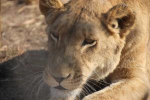 suedafrika-road-trip_5687
