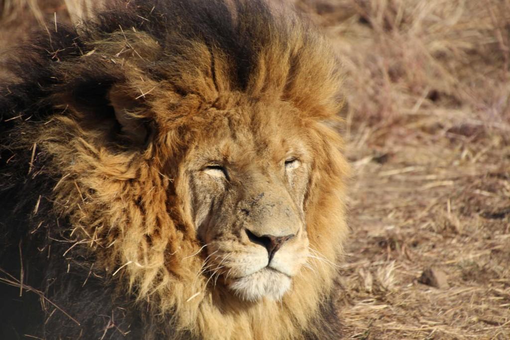 suedafrika-road-trip_5718