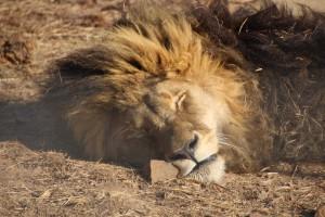 suedafrika-road-trip_5722