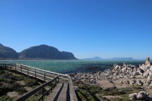 Bettys Bay bietet neben tollen Aussichten auch eine Pinguin Kolonie